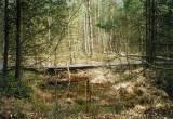 borkovická blata